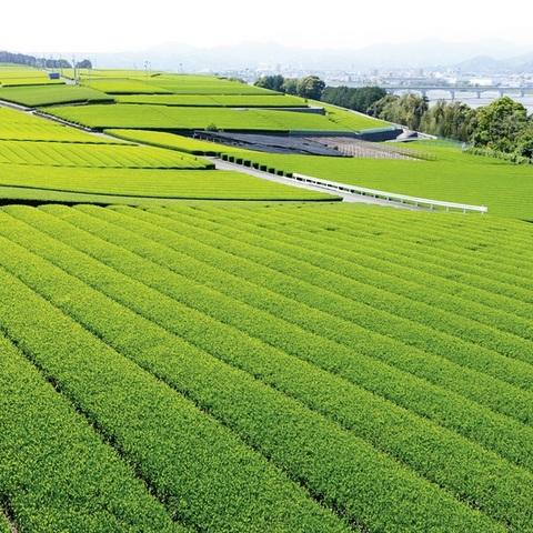 美しい茶畑「島田市阪本」/Japan Tea Fildsのサムネイル