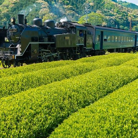 美しい茶畑「大井川鐵道沿線」/Japan Tea Fildsのサムネイル