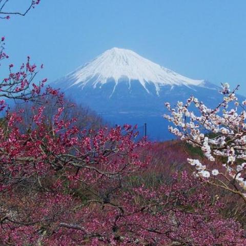 富士市 岩本山 (富士山ビューポイント)のサムネイル