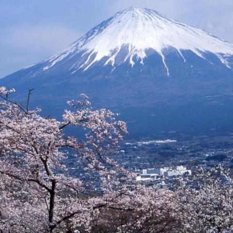 白尾山 (富士山ビューポイント)のサムネイル