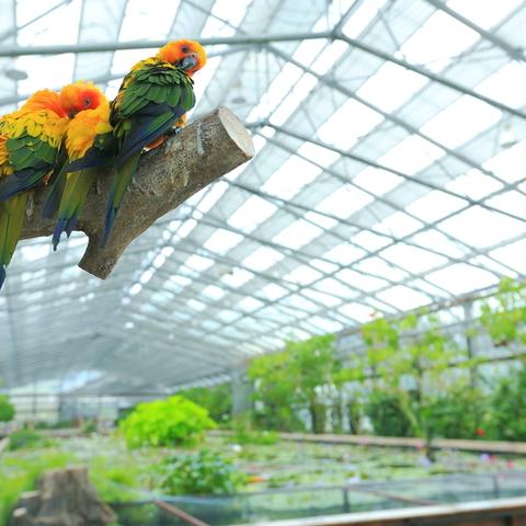Vườn hoa và chim
