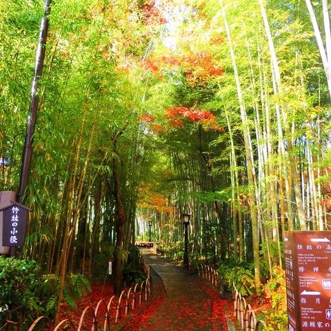 Diameter kecil hutan bambu