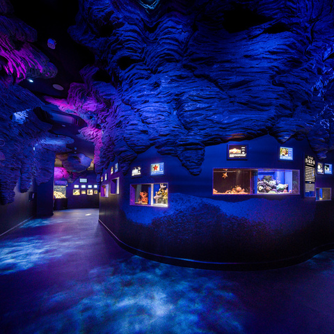 Numazu Port Deep Sea Aquarium Sheracanth Bảo tàng