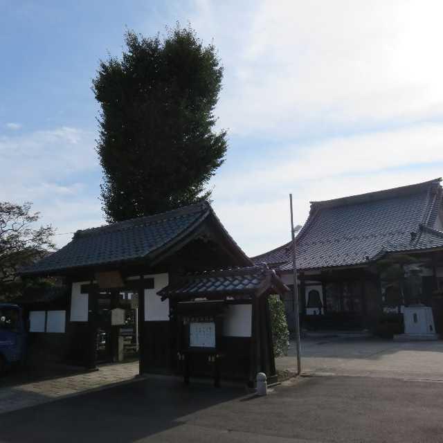 稱覚寺の大銀杏