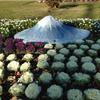 富士の裾野に花咲き誇る