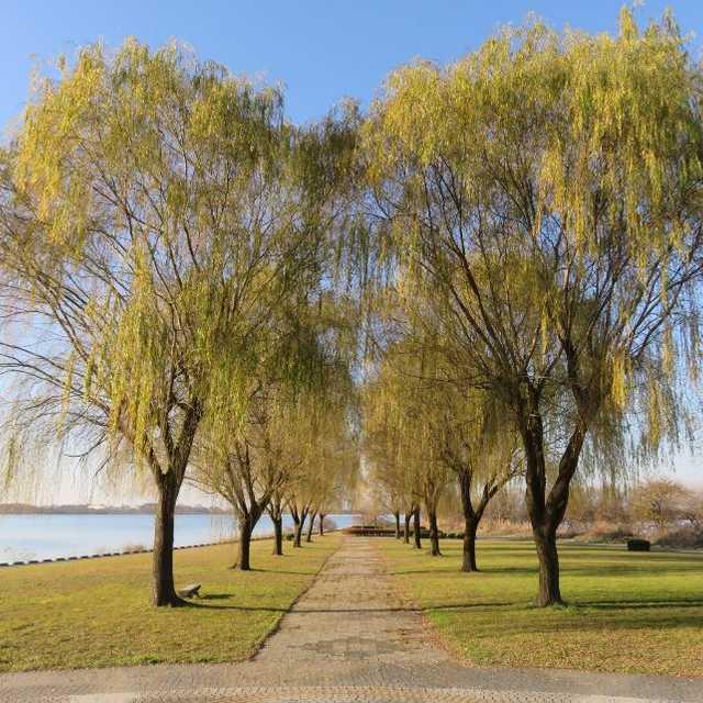 渡良瀬貯水池(谷中湖