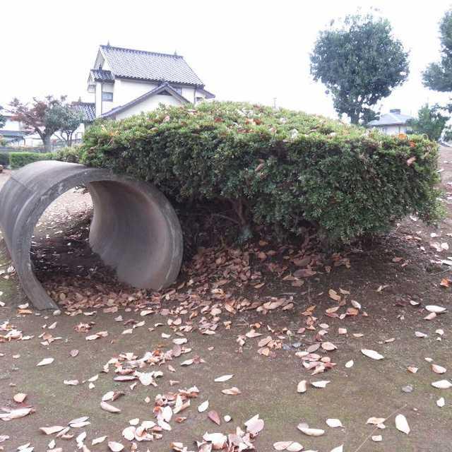 タヌキの巣穴?