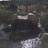 根川緑道 湧水口