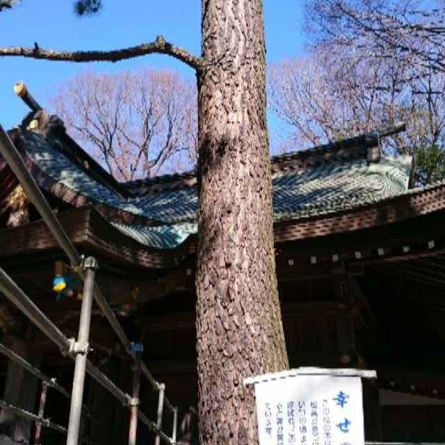 前鳥神社の「幸せ松」
