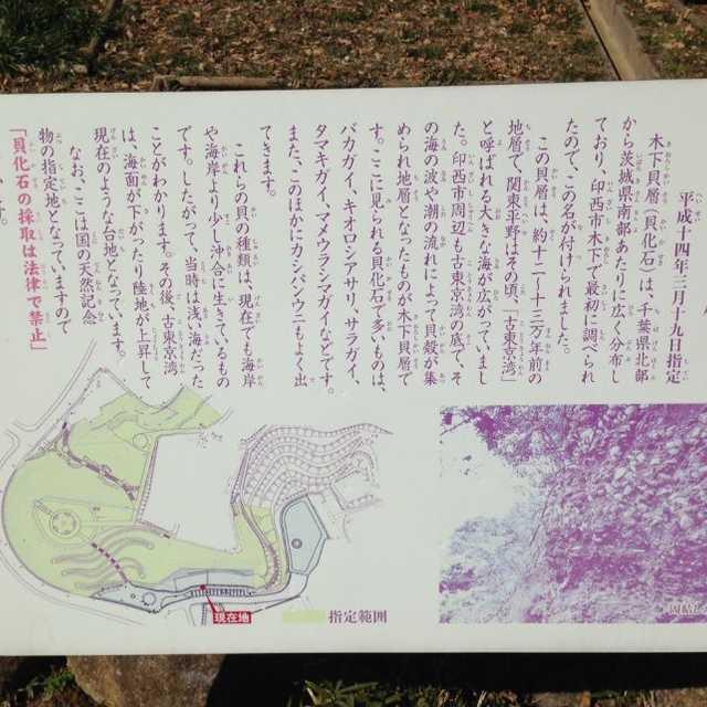 昔、千葉県北部から茨城県南部は海だった