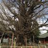 千葉寺のイチョウ