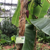 温室植物園