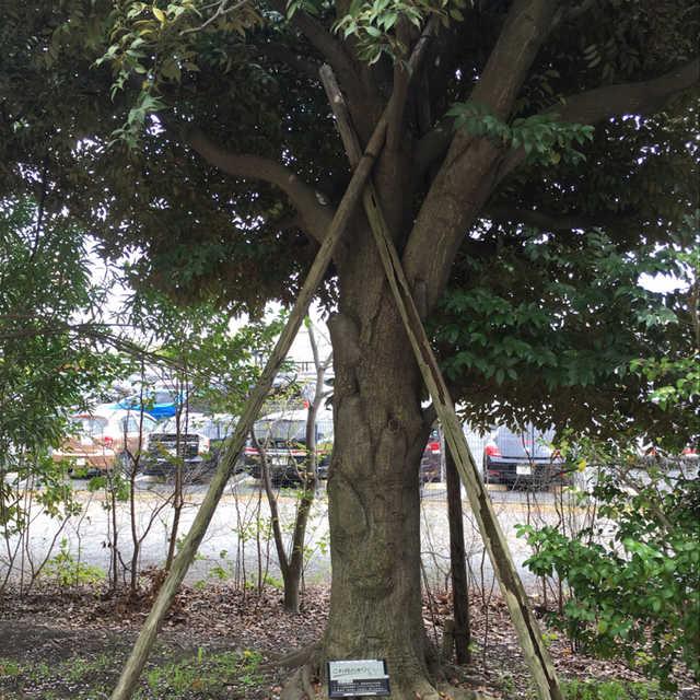 これ何の木?