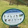 水辺・草地の鳥