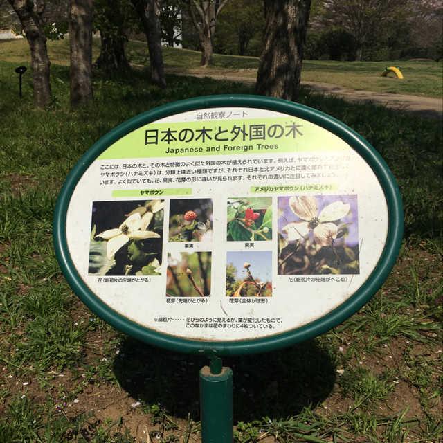日本の木と外国の木