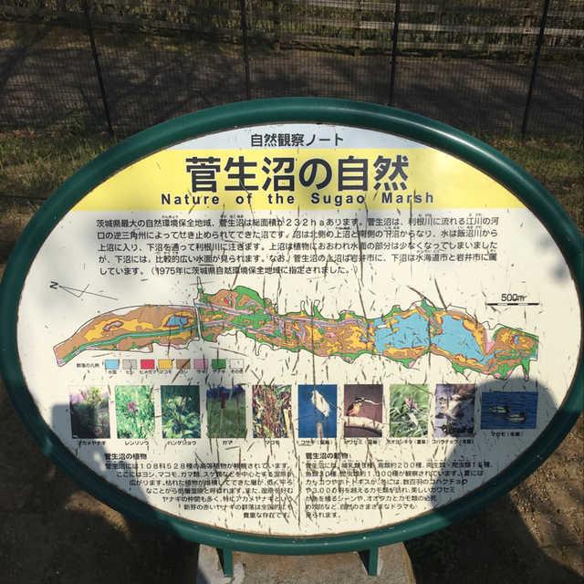 菅生沼の自然