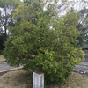 国体開催記念植樹