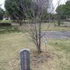 認証三〇周年記念植樹