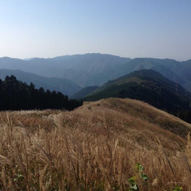 美しいススキの草原と