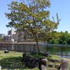 さびしそうな木