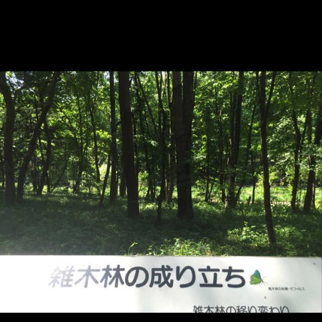 雑木林の成り立ち