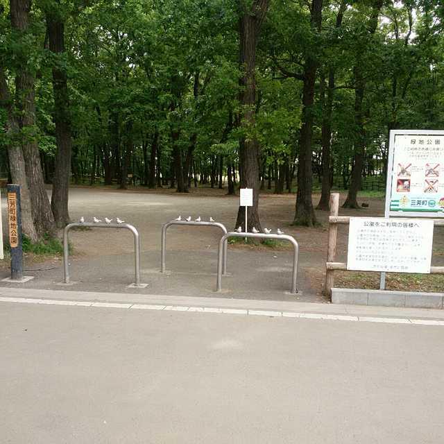 三芳町緑地公園(^_^)