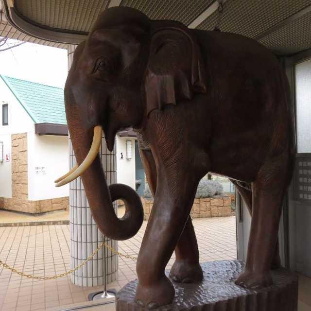 体重1.3トンを超える象さん
