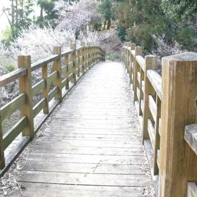 木製橋のある公園