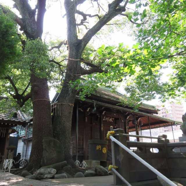 千住四丁目の氷川神社