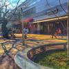 京王線仙川駅前の桜