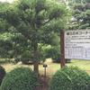 郷土の木コーナー