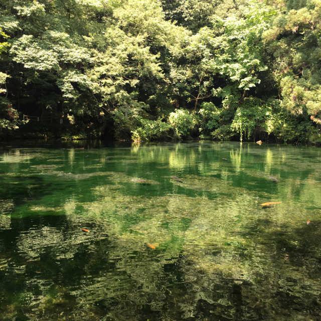 モネの池in栃木?