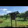 古代蓮の里の梅林