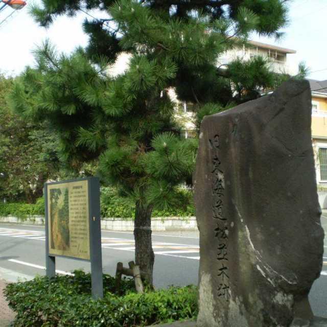旧東海道松並木跡
