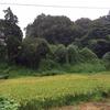 都道155号(自然豊かな景色)