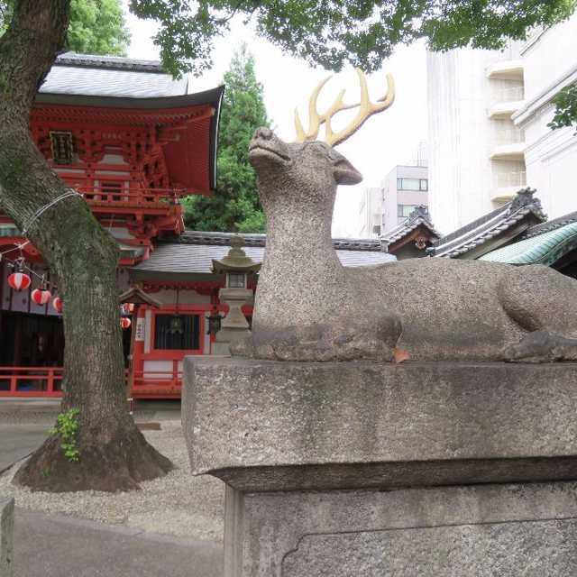 春日神社の鹿さん