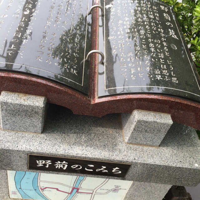 野菊のこみち