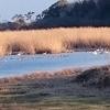 白鳥の飛来地ガバ沼