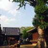 赤塚諏訪神社の夫婦イチョウ