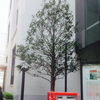 葉書の木♪