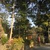 牟呂八幡宮の林