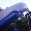 実物大!シロナガスクジラ♪