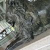 星ヶ丘三越にあるライオン像は何を見る?