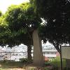 望欣台の碑