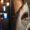 サメです!