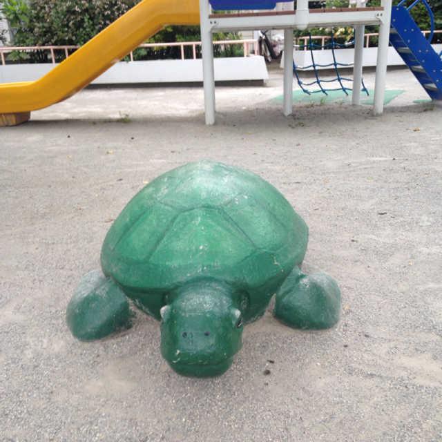 公園に亀が紛れ込んで