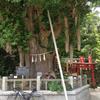 海南神社の銀杏