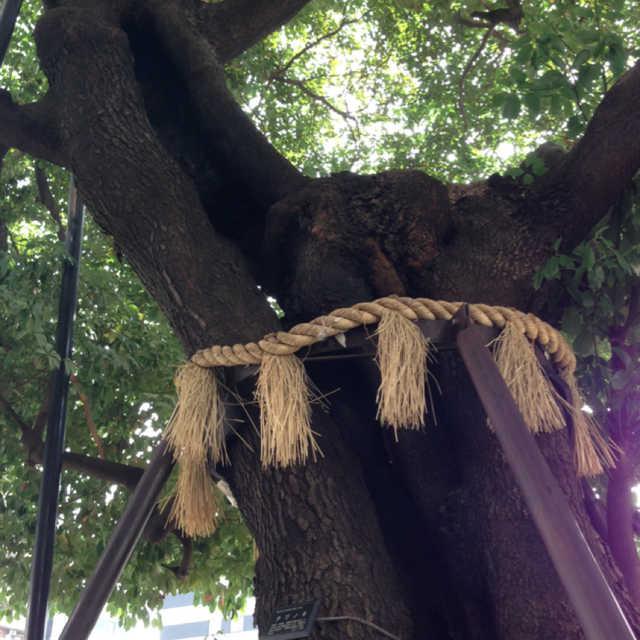 御園のタブノ木 その弍