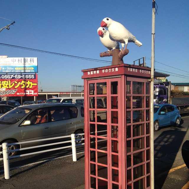 白文鳥の電話ボックス