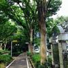 【一】日本一長いけやき並木